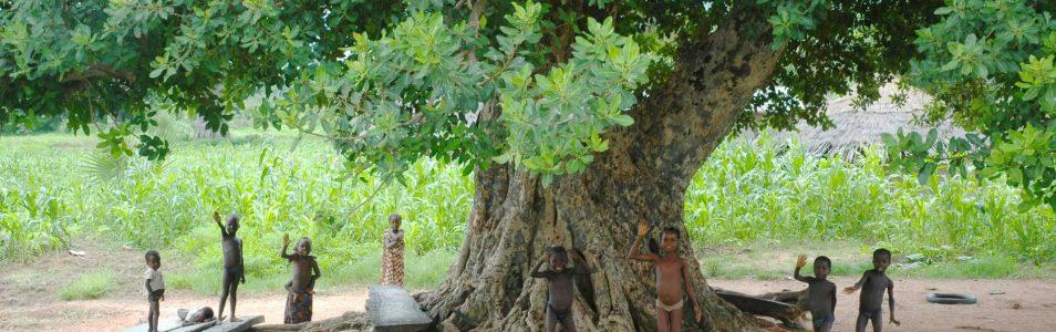 Il Baobab